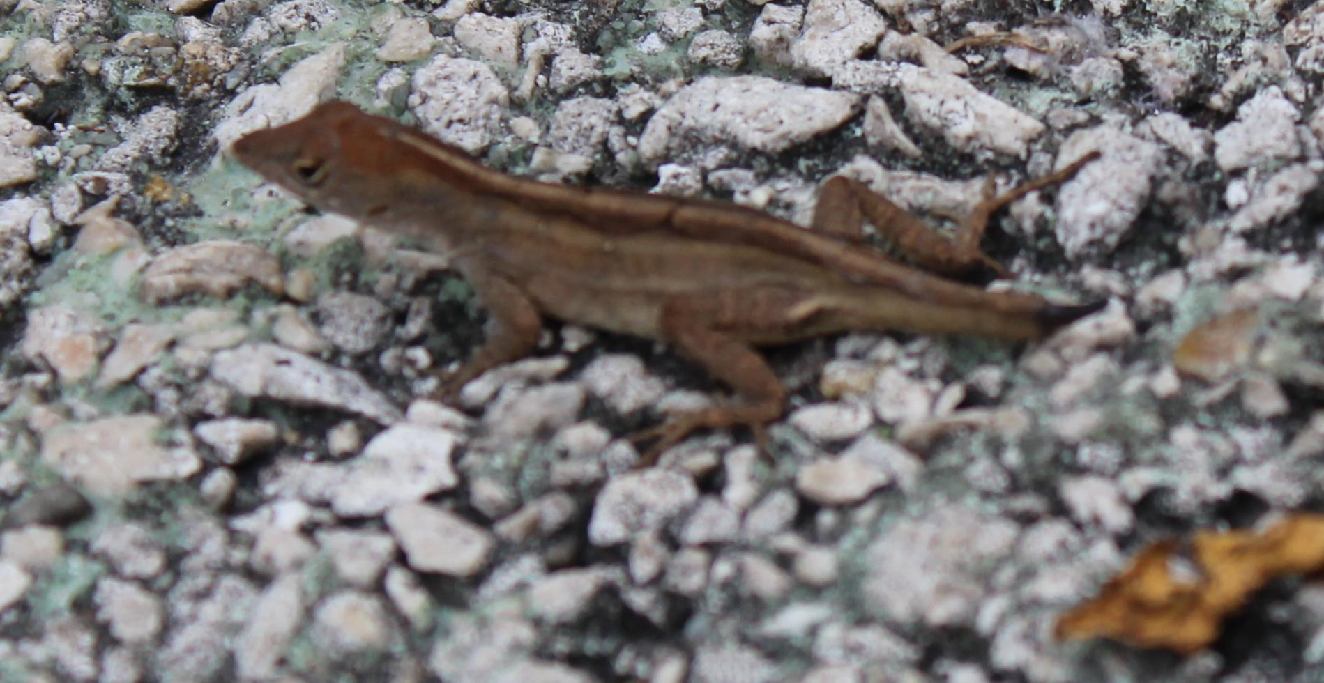 IMG_2815 lizards